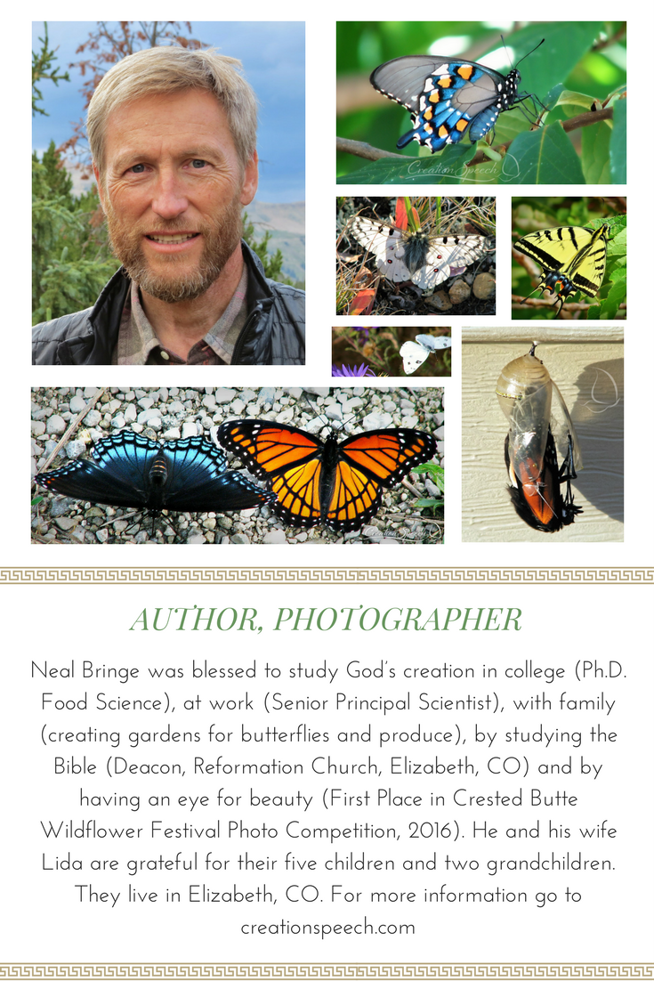 Neal Bringe, Author and Photographer